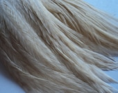 1 Dozen 3-5 inch White Striped SHORT Grizzly Rooster Feathers