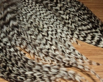 1 Dozen 6-8 inch Black and White Striped MEDIUM Grizzly Rooster Feathers