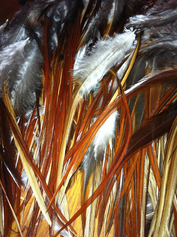 2 Dozen 5 inch Red/Brown Varient SHORT THICK Rooster Feathers