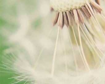 Dandelion V - Fine Art Photograph - 7 x 5 - Vintage Soft