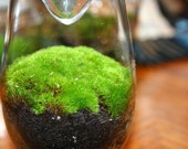 Moss Terrarium, Green - Valentine Gift, Recycled/Upcycled Glass Jar
