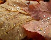 Autumn Leaves, Fall Trends, Water, Rain,  Drop, Yellow, Orange, Fall, Rain Drops, Gold - 8x10 Print