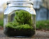 Moss Terrarium, Fathers Day Gift,  Woodland, Indoor Garden, Green, Nature
