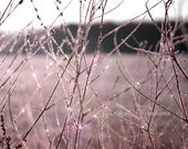 Pink,  Purple, Spring, Easter, Lavender, Pastel, Frost, Winter,  8x10- Nature Photography
