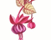 Fuchsia - Flower Art Print - Watercolor