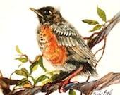 Baby Robin Art Print