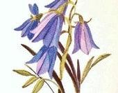 Bluebell, Wildflower Print, Watercolor Print, Spring Flower