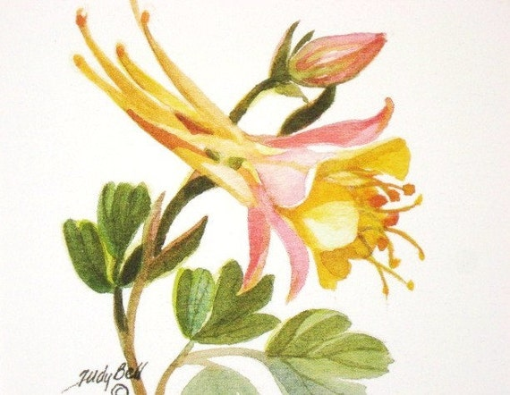 Columbine , Pink And Yellow , Wildflower , Watercolor Print