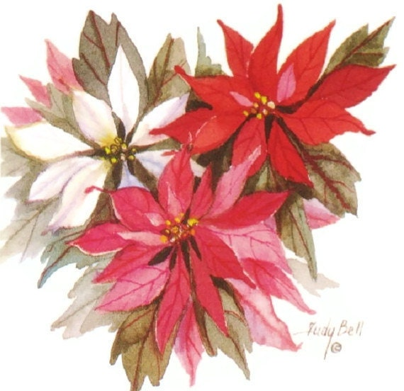 how to keep a poinsettia from year to year