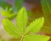 Nature Photograph Green Leaf -- 5x5