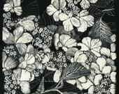 Hydrangea Fine Art Print of Scraperboard Original.