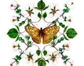 Spottedwood Butterfly with Blackberry Blossom Greetings Card
