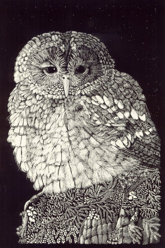 Little Owl Fine Art Print from original Scraperboard