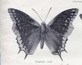 Butterfly Moths C Original Antique Print  Fritallary Chrysalis 1881 Encyclopaedia Britannica Rare 9th Edition