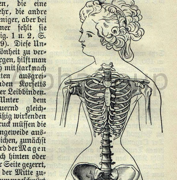 anatomy the german