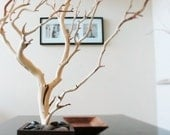 "30"" Natural Tree Jewelry holder / Jewelry Organizer"