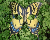 Leather Swallowtail Butterfly Mask Great for Mardi Gras, Masquerade, Halloween, Burningman, Cosplay Dragoncon,