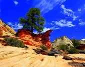Note Cards-Set of 4- The Seasons in Zion National Park