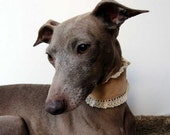 French Cream Collection - Cream Velvet with Cream Satin lining and Cream Lace Frill Italian Greyhound Collar