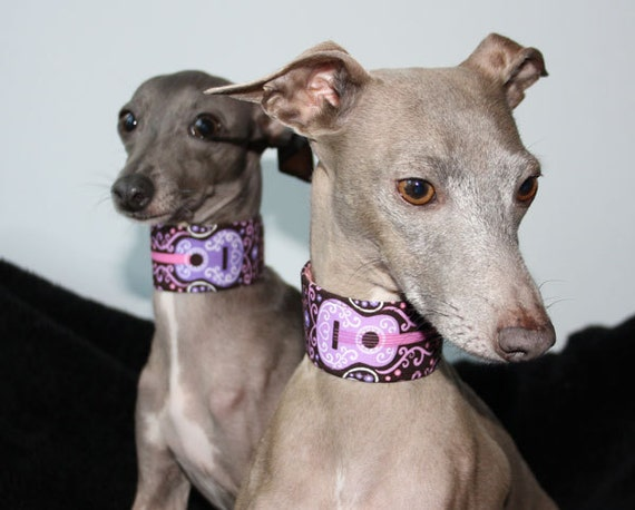 Music  and Movies Collection - Sweet Guitars Martingale or Wide Clip Italian Greyhound Collars