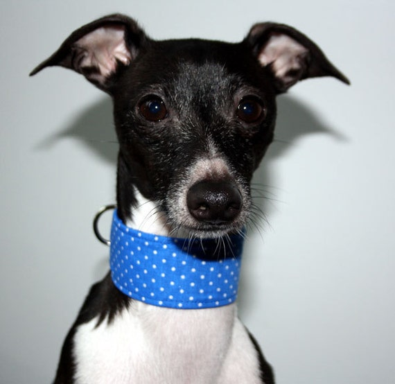 Royal Blue Polka Dots Martingale, Wide Clip or Wide Semi Slip Style Italian Greyhound Collar
