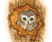 Wildlife Print -  Owl Art -  Bird Print