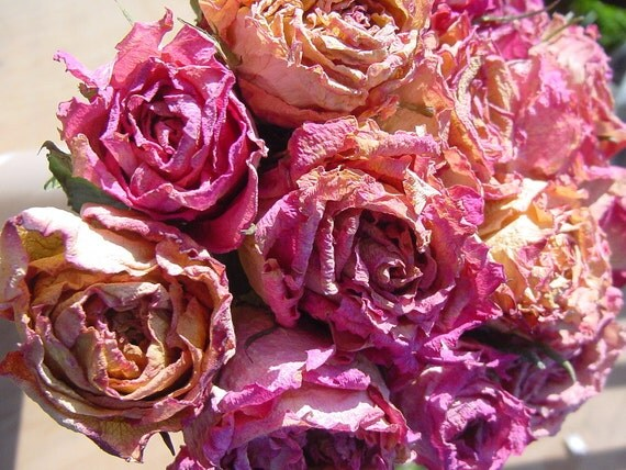15 Dried Roses - Natural Color - Roses for Luck, Love, Romance and all other Matters of the Heart