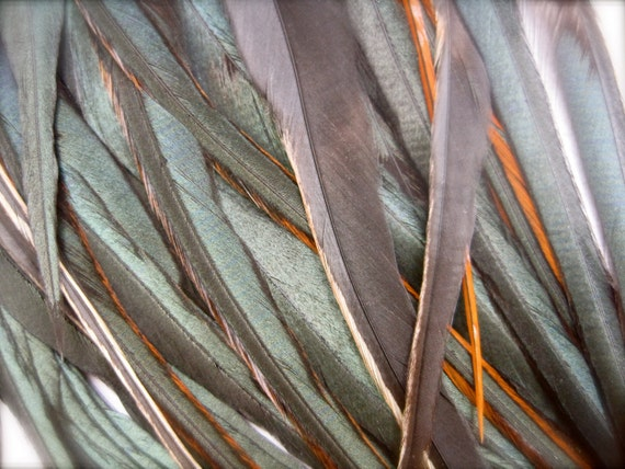 10 IRIDESCENT BLACK Feathers for Feather Extensions & 3 extensions beads