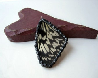 Real Butterfly Wing Jewelry Idea leuconoe
