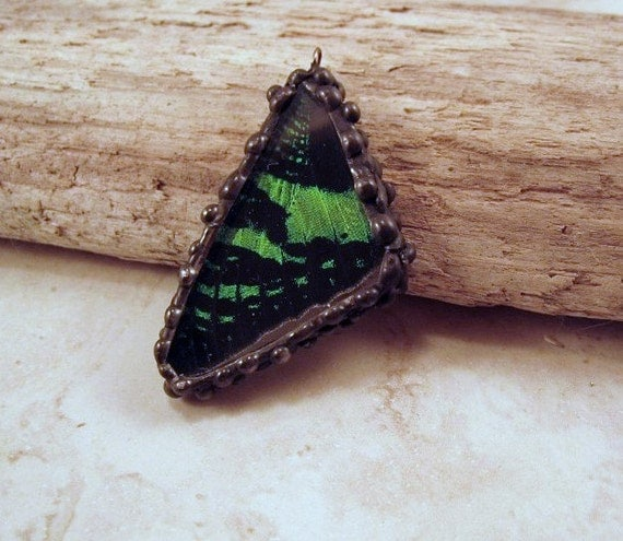 Green and Black Butterfly Wing Pendant - Real Butterfly