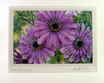Daisy Photo Greeting Card - Purple Flower
