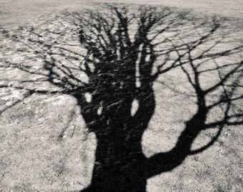 winter shadow, 8x10 fine art black & white photograph