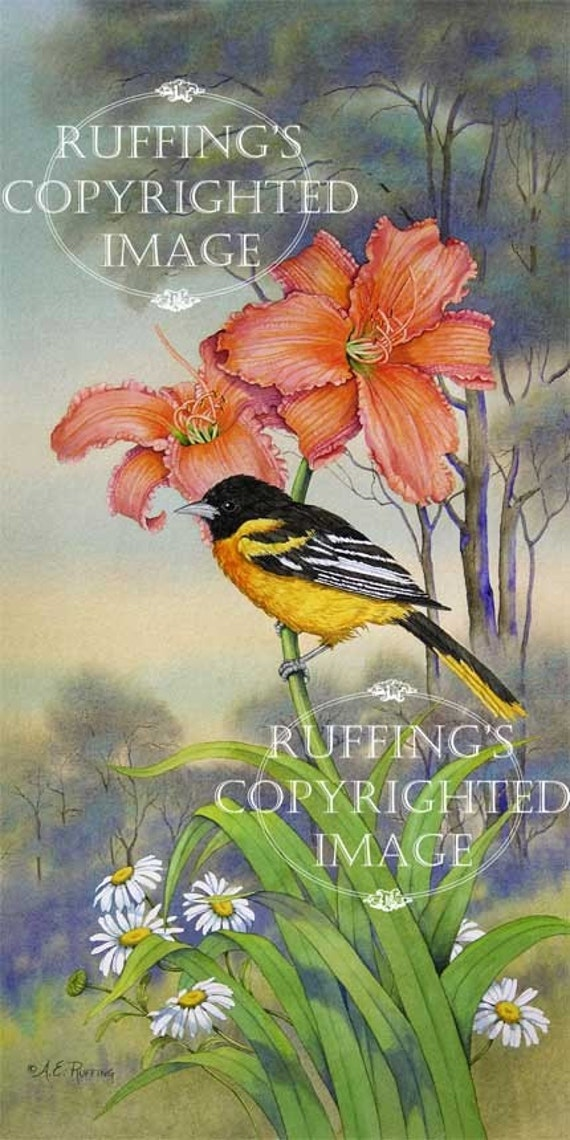 Northern Oriole, Orange Day Lilies, and Daisies Giclee Fine Art Print, Floral, Green, Yellow, Signed A E Ruffing, on 8.5 x 11 inch art paper