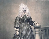 Poodle Dog Art, Mixed Media Collage Print, Willow, 5x7 Matte Altered Antique Civil War Photograph, frighten