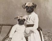 Pug Art, Mixed Media Collage, Sisters Art, Cute Dog Art, Anthropomorphic Art, Antique Photography, 5 x 7 Print, frighten