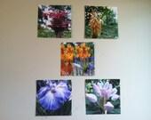 Set of 5 Floral Photos 5 x 5 - Ready to Ship