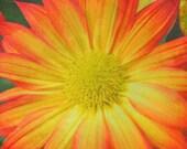 Spring Flower Art Photograph Bright Orange Yellow Flower Spring Decor Nature Garden 8x8
