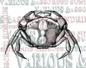 crab zoology digital stamp digi stamp cancer astrology resizable, transparent background, photoshop layer