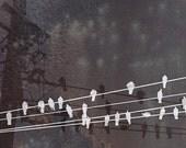 Black White Gray Birds On Wire - Wall Art - metallic photo