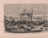 French Engraving from 1860  Native Australian burial