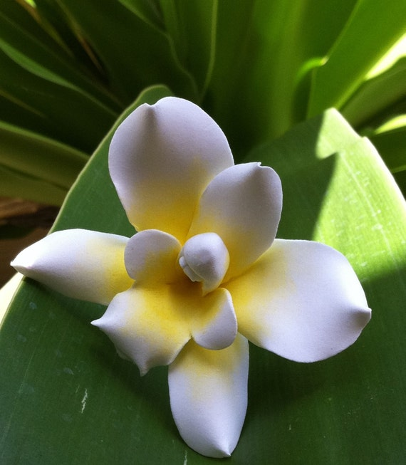 Beautiful,Hawaiian Orchid,White & Yellow, Dendrobium,Maui custom clay flowers,bridal,wedding,couture,handmade in hawaii