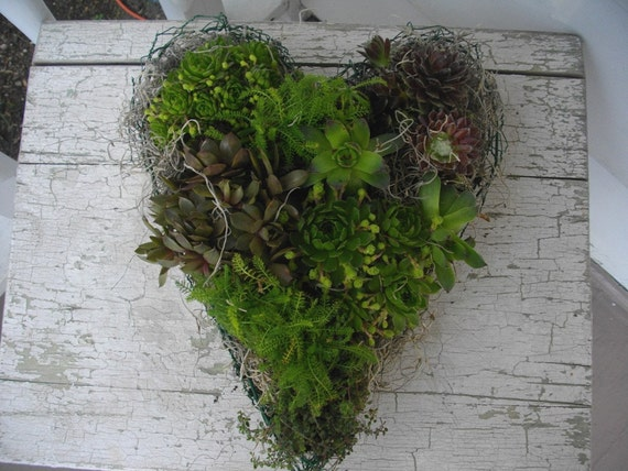 RESERVED BIGYELLOWDOGERNIE Chicken Wire Heart Frame Planter For Live Wreath Hens Chicks Succulents
