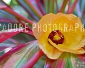 8x10/8x12 Photograph - 'Fallen' - Wainiha, Kauai