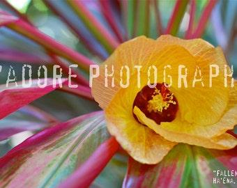 8x10/8x12 Photograph—'Fallen' (Kauai, USA)