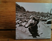 "Neskowin Driftwood Photo Block 4"" X 4"""