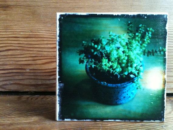 """Succulent Photo Block 4"""" X 4"""""""