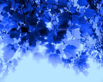 "Frosty Foliage - Fine Art Photography 8 x 10"""