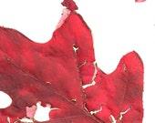 Botanical Cards: Fall Color (6)