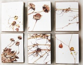 Late Winter Cards (Set of 6)