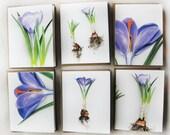 Spring Crocus Cards (Set of 6)